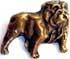 Englische Bulldogge 21 x 17mm gold